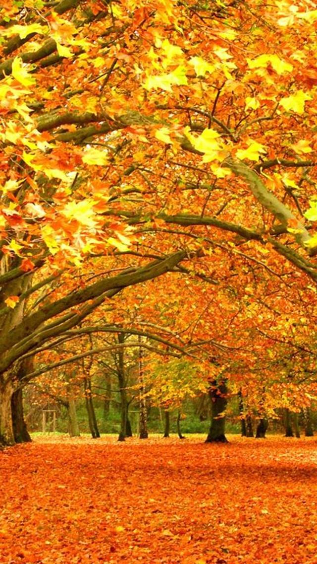 背景 壁纸 风景 绿色 绿叶 森林 树叶 植物 桌面 640_1136 竖版 竖屏
